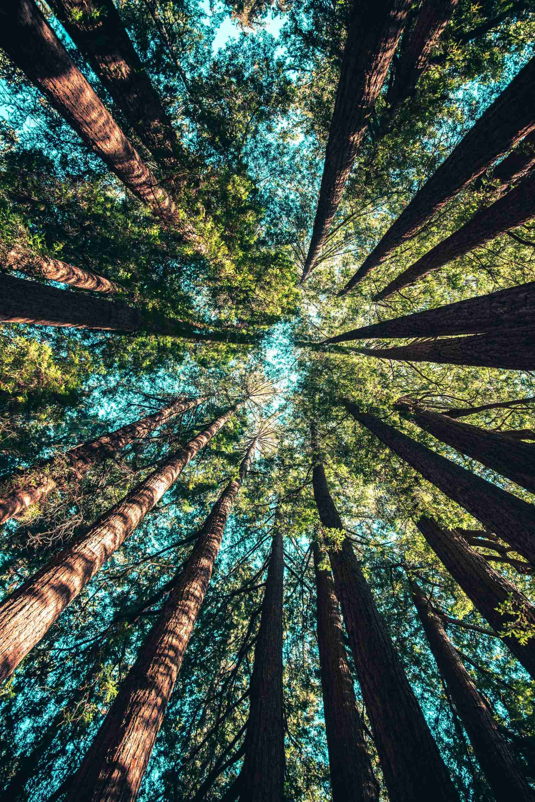 Trees looking straight up